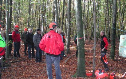 Forstwirtschaft in Ringingen